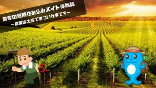 農家の短期住み込みバイト体験談