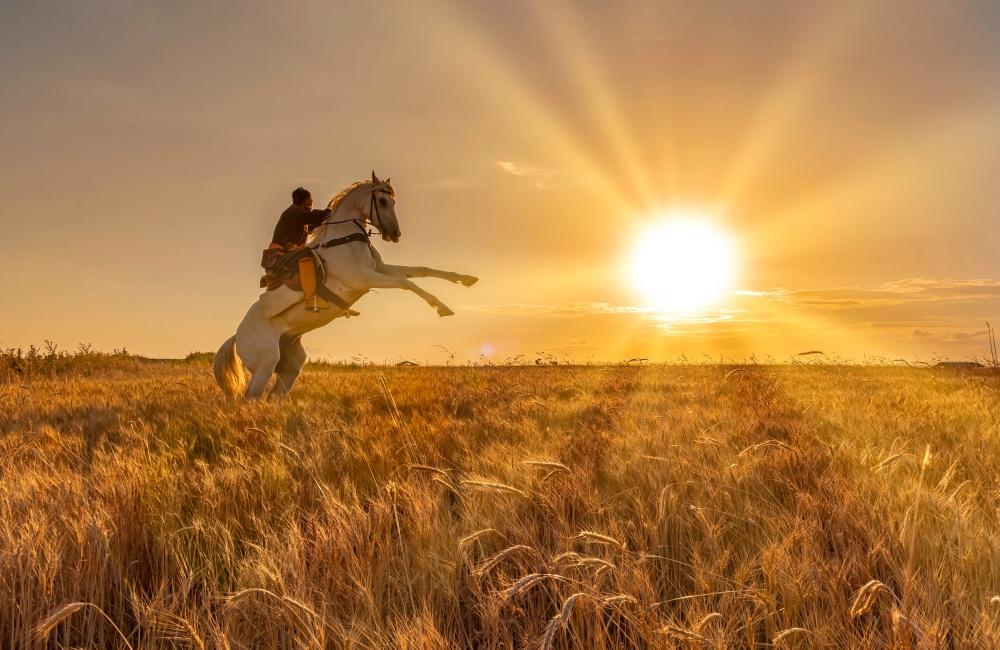 畑の中を馬で走る男