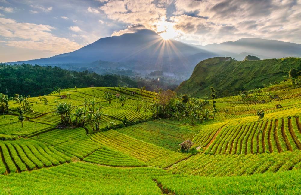 美しい玉ねぎ農業の景色
