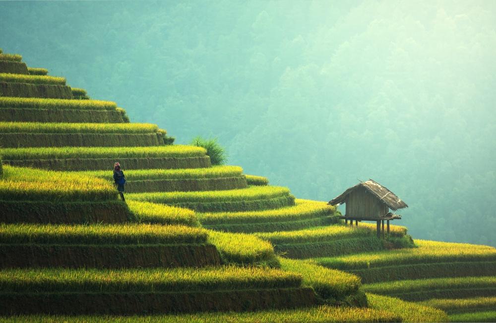 農業と自然