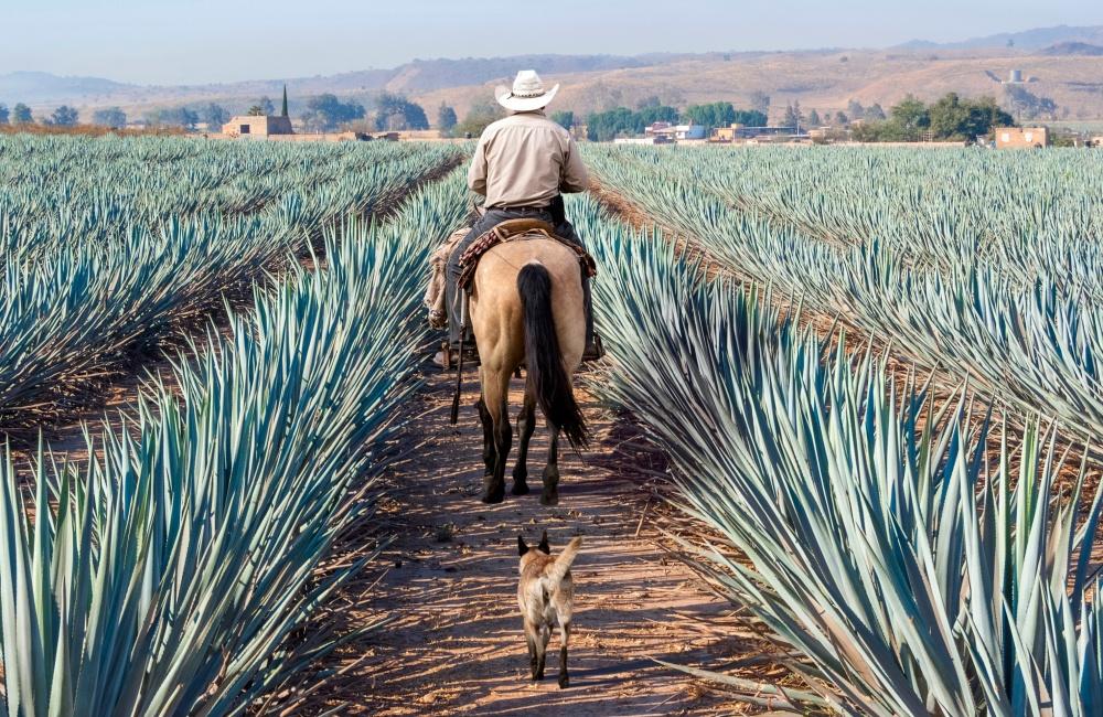 畑の中を馬で歩く男と犬