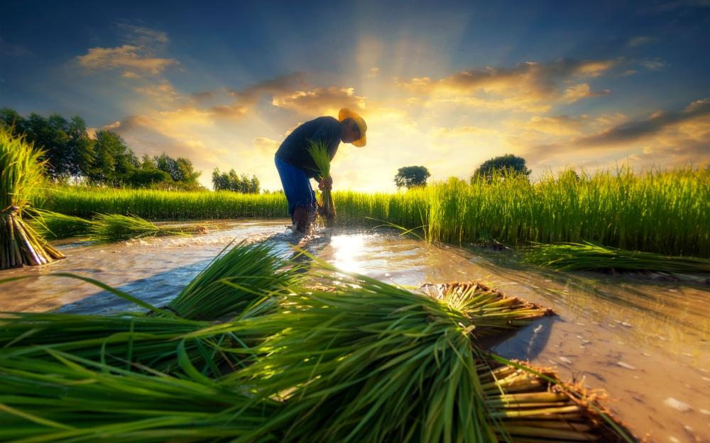 リゾートバイト 農業