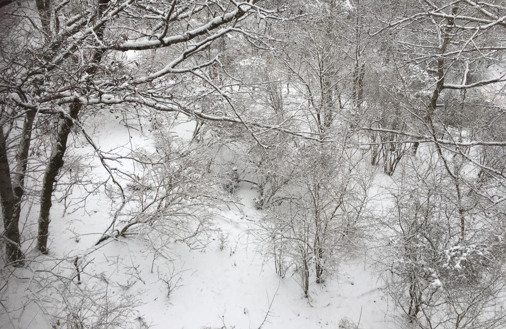 窓から見える雪
