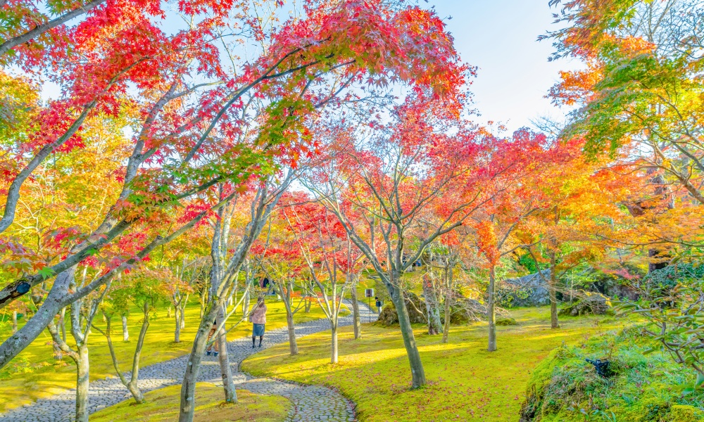 箱根の美しい紅葉の風景