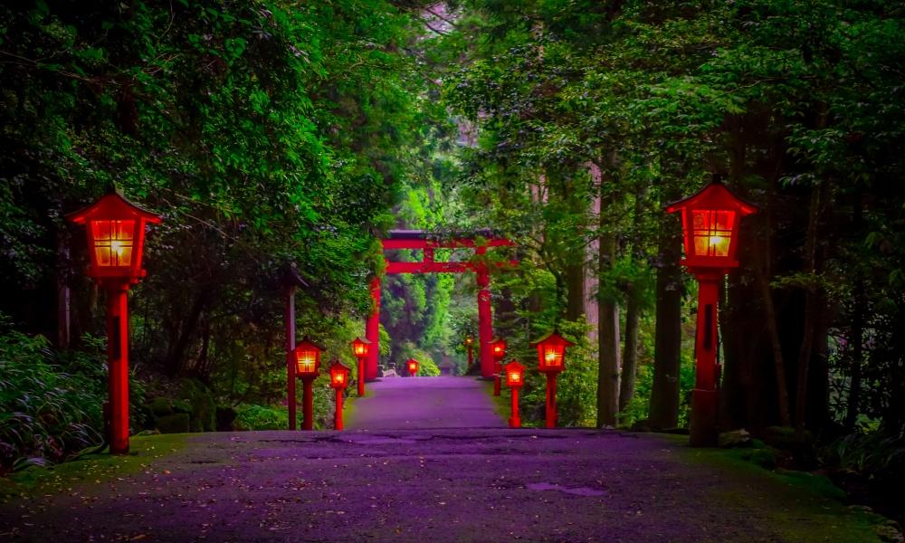 杉林の箱根神社参道の夜景
